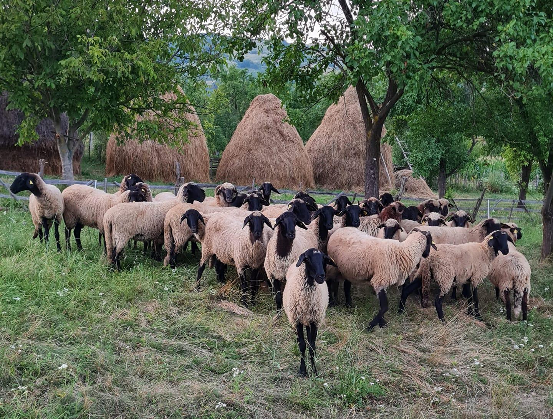 Asociaţia agricultorilor din Geoagiu, una dintre cele mai active din zonă